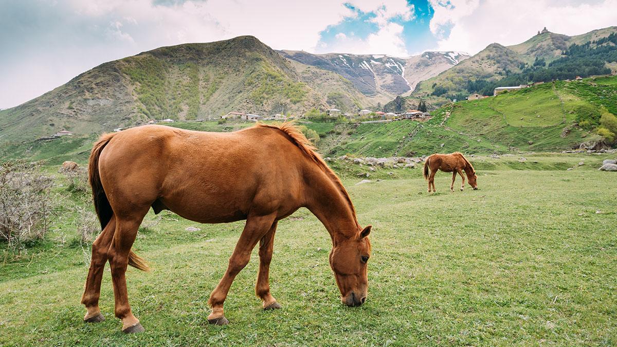 Bozkırda otlanan atlar. Kaynak: Envato fotoğraf arşivi