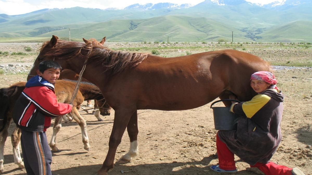 Suusamır, Kırgız yaylası Firespeaker - Yükleyenin kendi çalışması, CC BY-SA 3.0,  Kaynak: Wikimedia Commons'tan Özgür medya deposu